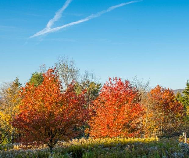 Fall Mt. Greylock